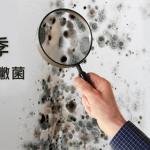 雨季,擾人的黴菌,家中最容易發黴的物品,如何防黴大作戰?