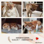 約莫前年冬天,認養了兩隻被遺棄的加菲貓兄弟🐱